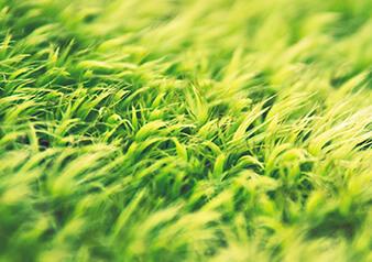 绿色业务与运营